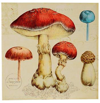 Vintage mushroom canvas