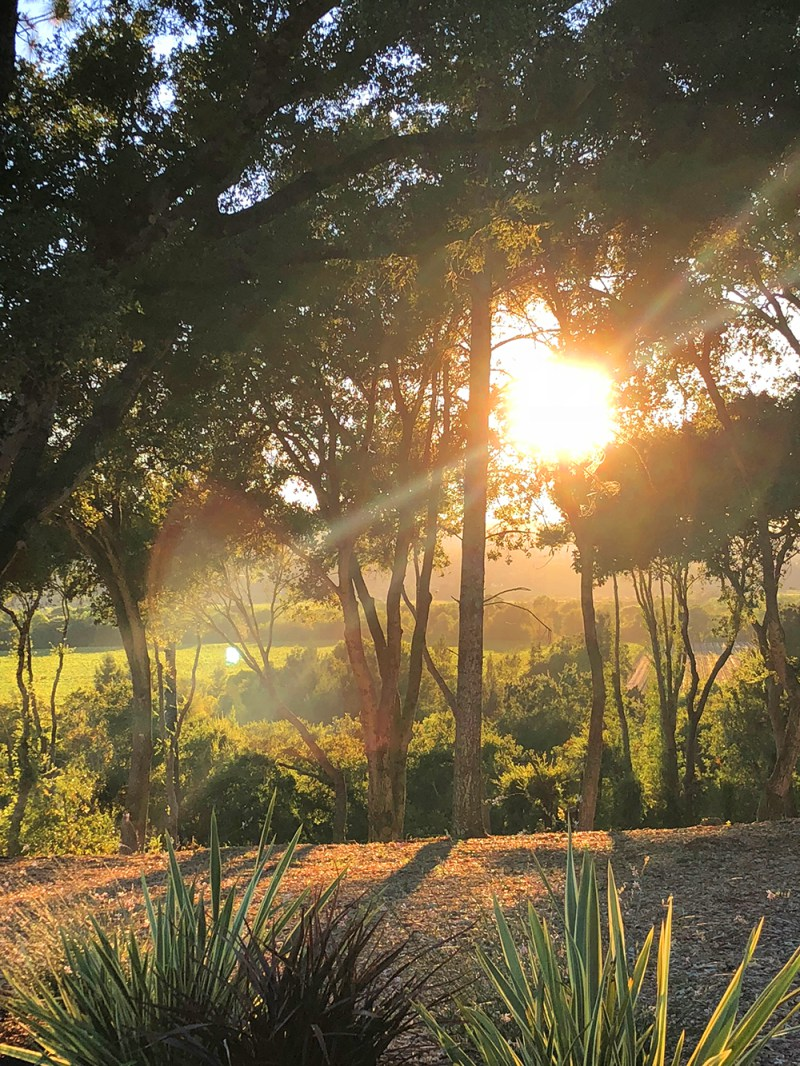 My whirlwind tour of wine country in Sonoma County, CA